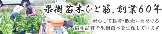 果樹苗ひと筋 創業50余年