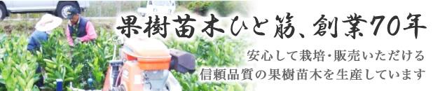 果樹苗ひと筋 創業70余年