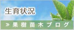 成育状況 果樹苗木ブログ