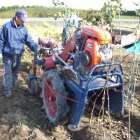 苗木の掘り取り作業
