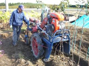 苗木の掘り取り作業2