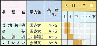 桜桃収穫期一覧表