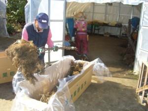 苗木の出荷作業