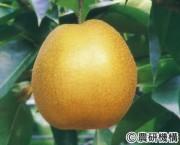 王秋(おおしゅう)